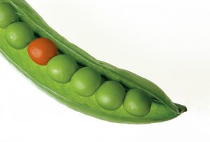Are all peas the same? Make a difference with IT to suit your individual organisation